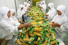 甜玉米生产车间